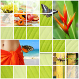 Fototapety Tropical summer collage