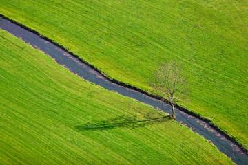 Baum mit Bach