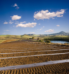 beautiful landscape of rolling cultivated land