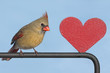 Cardinal With A Heart