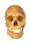 Old prehistoric human skull isolated poster