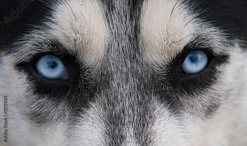 Acute  glance