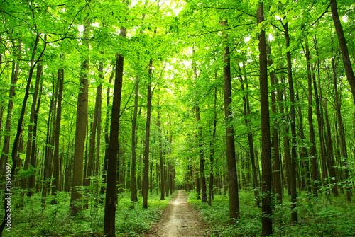 Obraz green forest