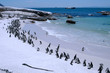 Penguin's beach outside Cape Town in South Africa