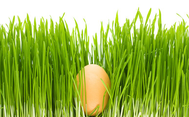 egg grass isolated