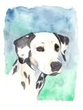 watercolor -  dalmatian poster