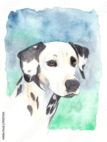 watercolor -  dalmatian