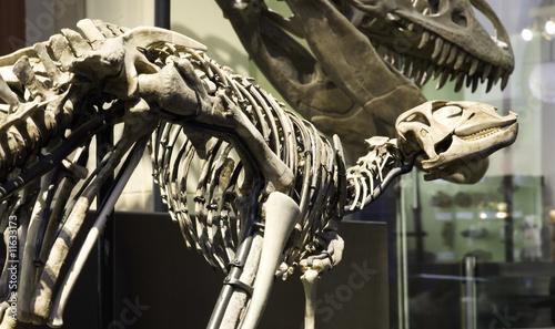 Leinwanddruck Bild Paleontological Museum in Berlin