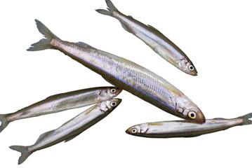 Fish Smelt 1