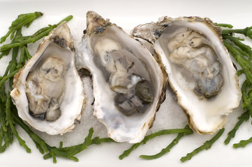 opened oysters on white plate