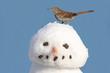 Brown Thrasher On A Snowman