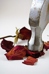 Hammer smashing Dried Rose