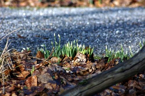 Frühlingszeit im Wald