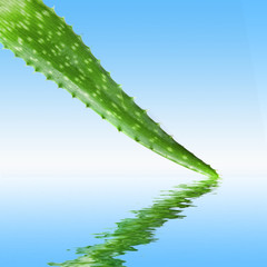 close-up photo of green aloe vera with water