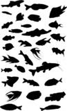 thirty two fish collection poster