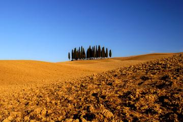 Zypresssenwäldchen im val d Orcia