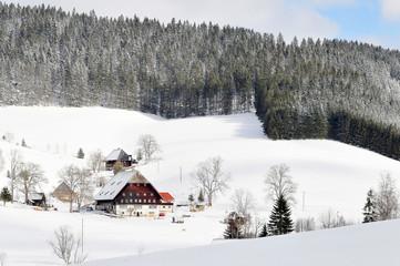 Schwarzwald im Schnee