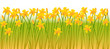 Spring background with flowers  of vector illustration