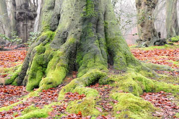 Moss growing around an old tree