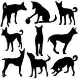 ombre di cani poster