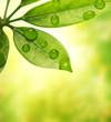 Green leaf over blurred background