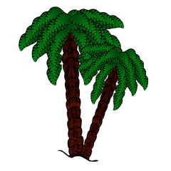 Isolated Double Palmtrees
