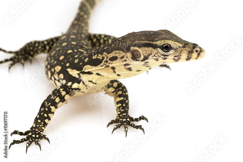 Asian Babies For Sale Baby Asian Water Monitor And