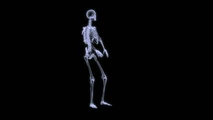 Xray of a human skelegon running