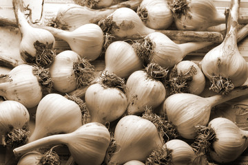 fresh garlic background