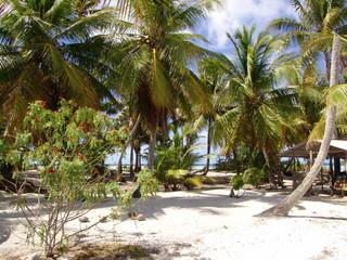 Palmeraie sur la plage de sable fin
