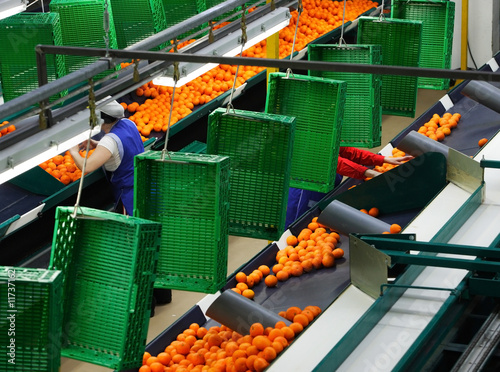 factory of oranges