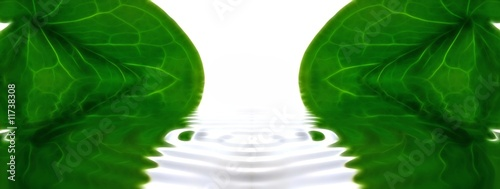 abstract background :arum  in the water,fresh atmosphere.