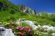 spring in the alps