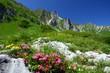 Fototapeten,alpen,alpenrose,urlaub,berg