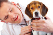 Veterinarian doctor and a beagle puppy