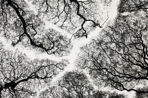 Tree silhouette - 11758785