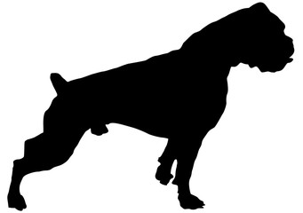 silhouette noire de chien boxer sur fond blanc