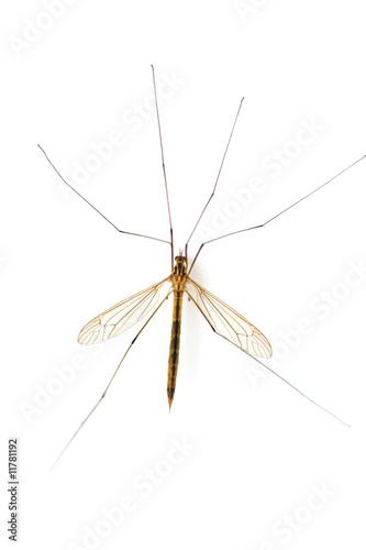 mosquito macro(2)