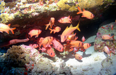 Colorful School of Fish on a Maui Reef