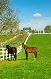 Kentucky Horse Ranch poster