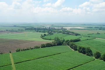 Foto aerea de cultivo de caña de azúcar 3