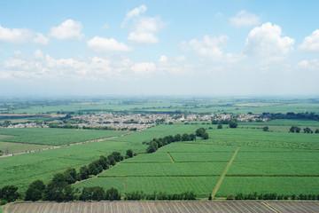 Foto aerea de cultivo de caña de azúcar 2