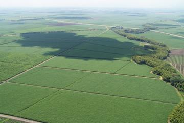Foto aerea de cultivo de caña de azucar 4