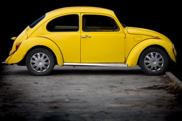 Yellow beatle