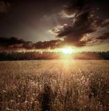 Fototapeta zbóż - chmury - Inne