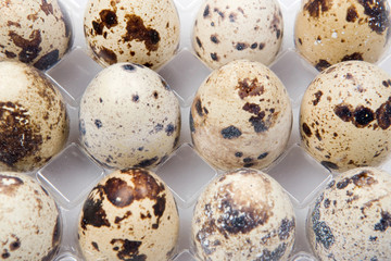 Picture of many small quail eggs