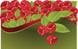Fruit fresh raspberry