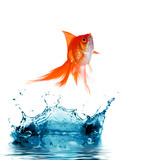 Fototapety Goldfish is jumping