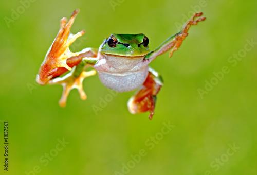 In de dag Kikker Frog