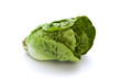 romaine lettuce isolated